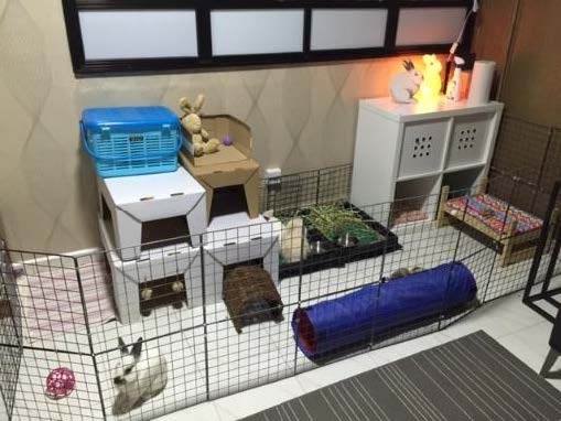 rabbits enclosed in one corner of the living room using metal grids.