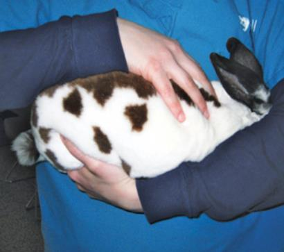 If the rabbit is nervous, you can gently tuck the rabbit's face under your arms without blocking their nostrils.