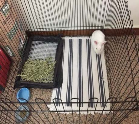 4-piece playpen for 1 rabbit (measures 1m by 1m)