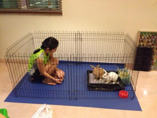 6-piece playpen for 2 rabbits (measures 2m by 1m)